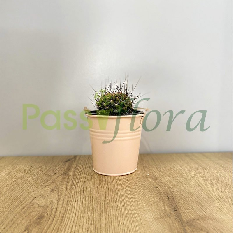 Cactus con portamaceta balde metálico