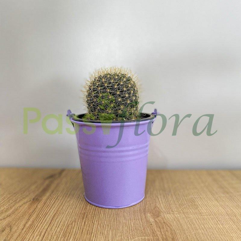 Cactus con portamaceta