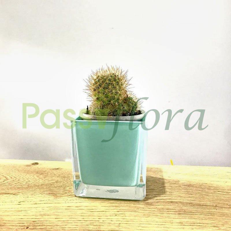 Cactus en porta maceta de cristal